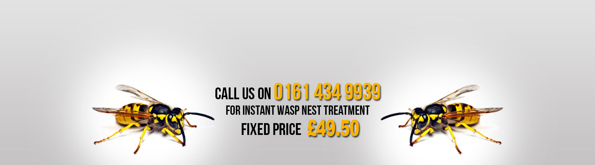 manchester wasp treatment